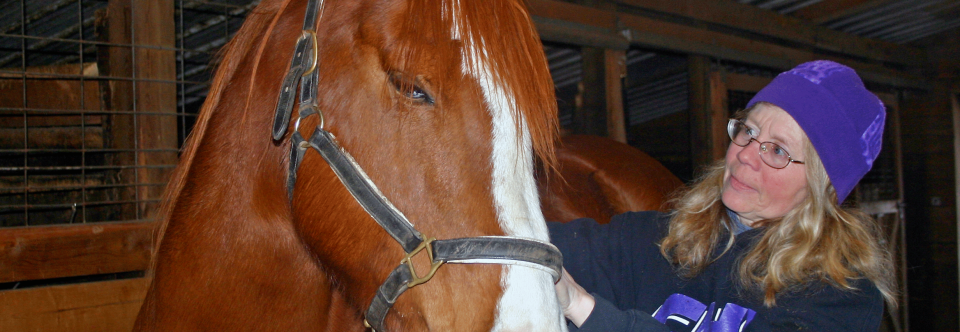 Equine Sports Massage Therapy